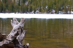 Κολόβωμα στη λίμνη στοκ φωτογραφία