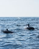 κολύμβηση θάλασσας κοπ&al Στοκ εικόνα με δικαίωμα ελεύθερης χρήσης
