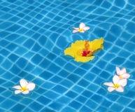 κολύμβηση λιμνών λουλο&upsil Στοκ φωτογραφία με δικαίωμα ελεύθερης χρήσης