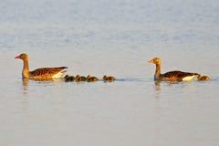 κολύμβηση λιμνών οικογε&n Στοκ φωτογραφία με δικαίωμα ελεύθερης χρήσης