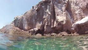 Κολύμβηση λιονταριών θάλασσας απόθεμα βίντεο