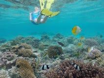 Κολύμβηση με αναπνευστήρα προσώπων υποβρύχια με τα ψάρια κοραλλιογενών υφάλων σε Rarotonga Στοκ Εικόνες