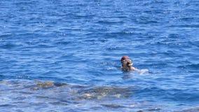 Κολύμβηση με αναπνευστήρα στη Ερυθρά Θάλασσα κοντά στην κοραλλιογενή ύφαλο Αίγυπτος, Sheikh Sharm EL απόθεμα βίντεο