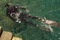 κολύμβηση με αναπνευστήρ& Στοκ φωτογραφίες με δικαίωμα ελεύθερης χρήσης