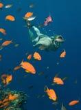 κολύμβηση με αναπνευστήρ& Στοκ Εικόνες
