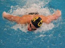 κολύμβηση πεταλούδων Στοκ εικόνες με δικαίωμα ελεύθερης χρήσης