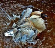 Κολύμπησε το νερό σας Στοκ Φωτογραφίες