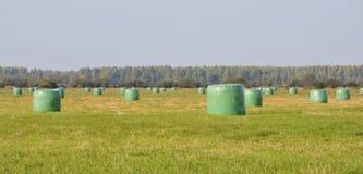 Κομμάτια σανού στο λιβάδι, Λιθουανία Στοκ Εικόνες