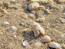 Κομμάτια των θαλασσινών κοχυλιών στην άμμο μια ηλιόλουστη ημέρα στοκ εικόνα