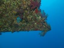 Κομμάτι κοραλλιών συντριμμιών σκαφών Στοκ εικόνες με δικαίωμα ελεύθερης χρήσης
