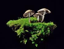 Κομμάτι της φύσης Στοκ Εικόνες