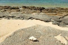 Κομμάτι του κοραλλιού στη δύσκολη ακτή Στοκ φωτογραφία με δικαίωμα ελεύθερης χρήσης