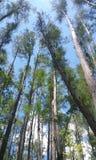 Κομμάτι του ουρανού με το δάσος σας Στοκ φωτογραφία με δικαίωμα ελεύθερης χρήσης