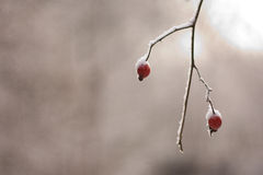 Κομμάτι του χειμώνα Στοκ φωτογραφία με δικαίωμα ελεύθερης χρήσης