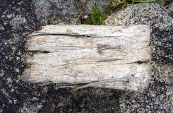 Κομμάτι του driftwood απολύτως ξηρό σε ένα υπόβαθρο πετρών με ένα β Στοκ Φωτογραφίες