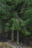 Κομψά δέντρα Στοκ Εικόνες