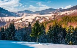 Κομψά δέντρα στη χιονώδη αγροτική βουνοπλαγιά στα βουνά Στοκ εικόνες με δικαίωμα ελεύθερης χρήσης
