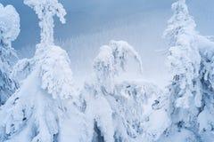 Κομψά δέντρα στο χιόνι και hoarfrost στοκ φωτογραφίες με δικαίωμα ελεύθερης χρήσης