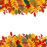 Κομψά και όμορφα φύλλα και στοιχεία φθινοπώρου Φωτεινές εικόνες για την ημέρα των ευχαριστιών ελεύθερη απεικόνιση δικαιώματος