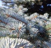Κομψά φύλλα δέντρων την άνοιξη στοκ εικόνες