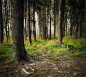 Κομψή δασική ακόμα ζωή βραδιού Στοκ εικόνα με δικαίωμα ελεύθερης χρήσης