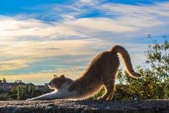 Κομψή γάτα Στοκ Εικόνες