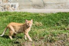 Κομψή γάτα Στοκ Φωτογραφίες
