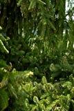 Κομψή κινηματογράφηση σε πρώτο πλάνο δέντρων Στοκ Φωτογραφία