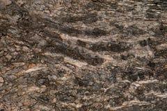 Κομψή οριζόντια σύσταση του ξύλου σανίδων Στοκ εικόνες με δικαίωμα ελεύθερης χρήσης