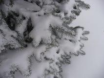 Κομψοί κλάδοι κάτω από το πρώτο χιόνι υπόβαθρο για τους νέους χαιρετισμούς έτους στοκ φωτογραφία με δικαίωμα ελεύθερης χρήσης