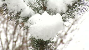 Κομψός κλάδος με το χιόνι απόθεμα βίντεο
