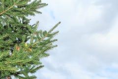 κομψός χειμώνας ουρανού εποχής κλάδων ανασκόπησης μπλε στοκ φωτογραφίες με δικαίωμα ελεύθερης χρήσης