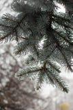 κομψός χειμώνας ουρανού εποχής κλάδων ανασκόπησης μπλε Στοκ Εικόνες