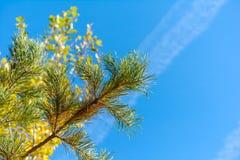 κομψός χειμώνας ουρανού εποχής κλάδων ανασκόπησης μπλε Στοκ εικόνες με δικαίωμα ελεύθερης χρήσης