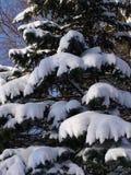 κομψός χειμώνας Στοκ εικόνες με δικαίωμα ελεύθερης χρήσης