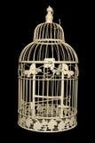 κομψός sahbby κλουβιών πουλιώ Στοκ Φωτογραφίες