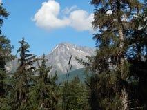 Κομψό δάσος με τα βουνά Στοκ Εικόνα