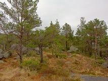 Κομψό δάσος με τη χλόη και βράχοι στο Stavanger, Νορβηγία Στοκ Εικόνες
