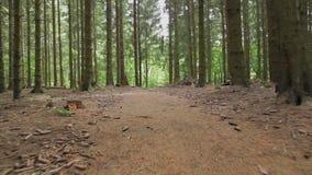 Κομψό δάσος μια θερινή ημέρα απόθεμα βίντεο