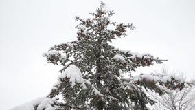 Κομψό δέντρο με πολλούς κώνους σε μια χιονοθύελλα Γκρίζα και θυελλώδης χειμερινή ημέρα φιλμ μικρού μήκους