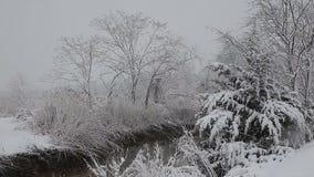 Κομψό δέντρο με πολλούς κώνους σε μια χιονοθύελλα Γκρίζα και θυελλώδης χειμερινή ημέρα απόθεμα βίντεο