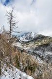 Κομψό δάσος μετά από τη φυσική καταστροφή στα υψηλά βουνά Tatras, S Στοκ εικόνα με δικαίωμα ελεύθερης χρήσης