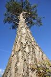 κομψό δέντρο Στοκ εικόνες με δικαίωμα ελεύθερης χρήσης