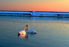 κομψό ζευγάρι Στοκ φωτογραφία με δικαίωμα ελεύθερης χρήσης