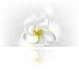 κομψό λουλούδι eps10 ανασκόπ&e απεικόνιση αποθεμάτων