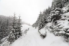 Κομψό ομιχλώδες δάσος δέντρων που καλύπτεται από το χιόνι στο χειμερινό τοπίο Στοκ Εικόνα