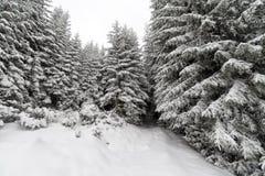 Κομψό ομιχλώδες δάσος δέντρων που καλύπτεται από το χιόνι στο χειμερινό τοπίο Στοκ φωτογραφία με δικαίωμα ελεύθερης χρήσης