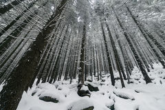 Κομψό ομιχλώδες δάσος δέντρων που καλύπτεται από το χιόνι στο χειμερινό τοπίο Στοκ φωτογραφίες με δικαίωμα ελεύθερης χρήσης