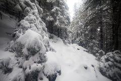 Κομψό ομιχλώδες δάσος δέντρων που καλύπτεται από το χιόνι στο χειμερινό τοπίο Στοκ εικόνα με δικαίωμα ελεύθερης χρήσης