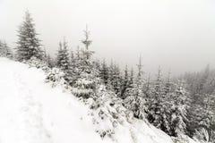 Κομψό ομιχλώδες δάσος δέντρων που καλύπτεται από το χιόνι στο χειμερινό τοπίο Στοκ Εικόνες